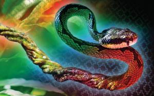 Antes de tomar ayahuasca, considera este artículo informativo